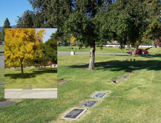 Oakdale Memorial Park Cemetery | Providing Cemetery Plots To